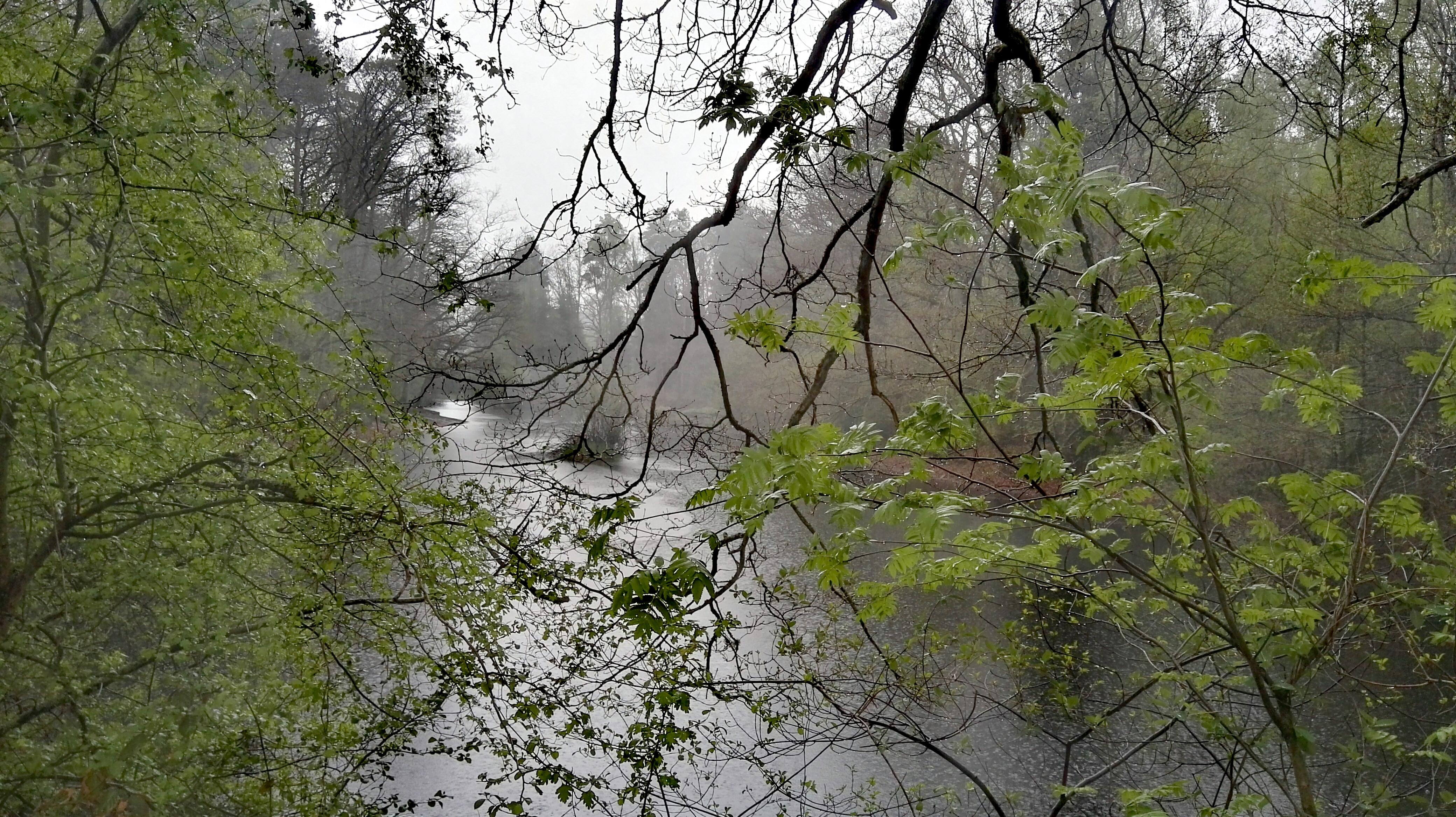 Warndtweiher-im-Regen